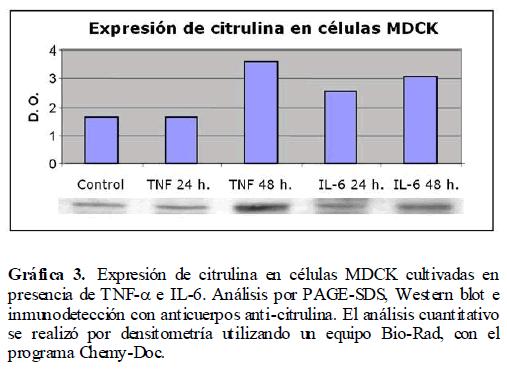 Archivos-de-Medicina-anticuerpos-anti-citrulina