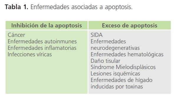 archivosdemedicina-asociadas-apoptosis
